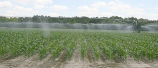 Irrigation on corn on the UGA Tifton Campus.